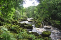 fly fishing holidays on the River Deveron 2