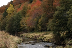 fly fishing holidays on the River Deveron 8